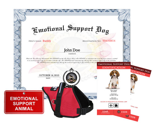 Emotional Suport Dog In Training Kit